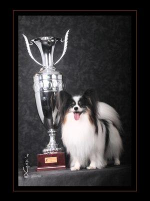 ancredasia-elevage-pour-chien
